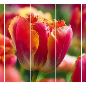 Multiple Frames Tulip Flower Wall Painting for Living Room, Bedroom, Office, Hotels, Drawing Room (150cm X 76cm)