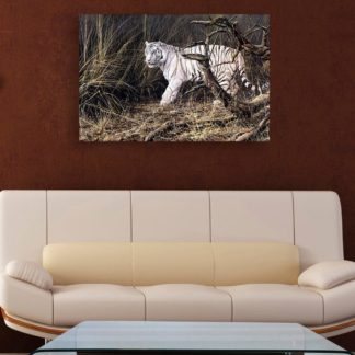 Canvas Painting - Beautiful White Tiger Wildlife Art Wall Painting for Living Room