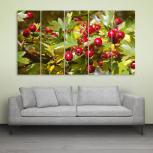 Multiple Frames Beautiful Berries Wall Painting for Living Room, Bedroom, Office, Hotels, Drawing Room (150cm x 76cm)